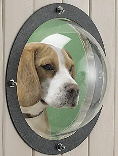 Pet Peek – окно в мир для вашей собаки