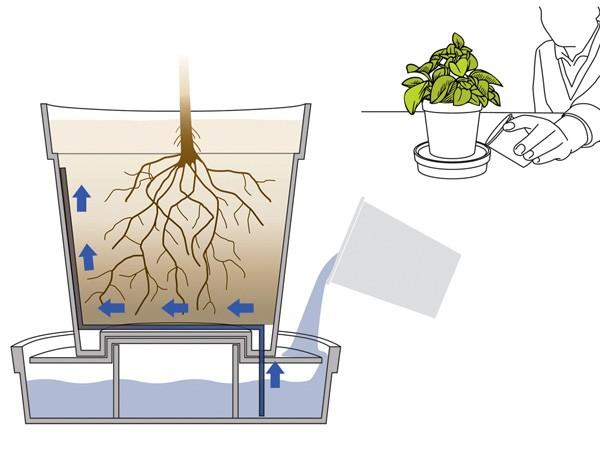 Концептуальный цветочный горшок iGrow экономит воду и время