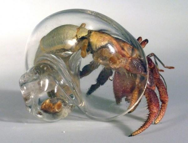 Crabitats — искусственные раковины для крабов-отшельников