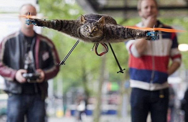 Кот-вертолет в память о домашнем питомце