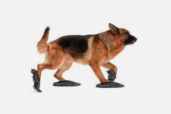Pet Sweep: как заставить собаку убираться по дому