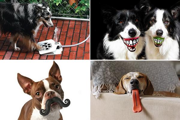 ТОП-10 необычных аксессуаров для собак