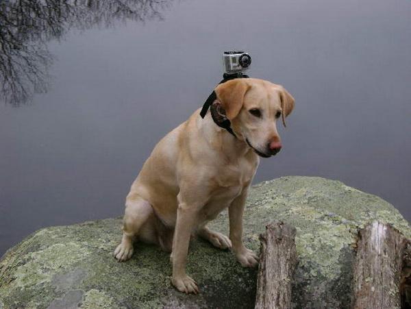 Камера для собак Mount's MUTT MOUNT