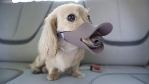 намордник от компании Shaped, превращающий собаку в утку
