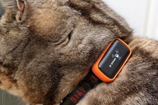 GPS-чип для питомца G-Paws