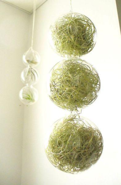Стеклянные горшки для цветов