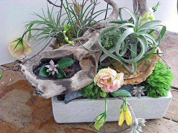 Деревянная коряга - цветочный горшок