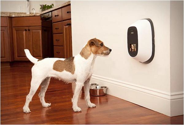 PetChatz: связь с собакой на расстоянии