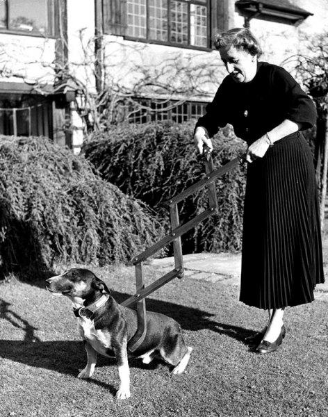 Поводок для собак