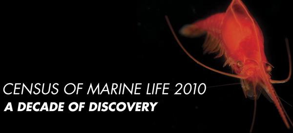 Перепись населения Океана. Источник фото: Census of Marine Life