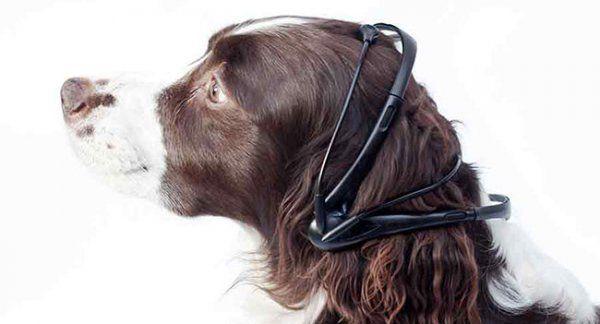 Уникальное устройство No More Woof Dog