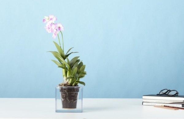 Кашпо, благодаря которому цветы нужно поливать не более одного раза в месяц.