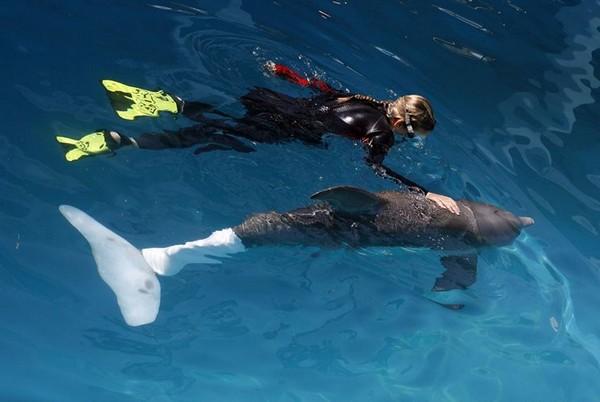 Дельфин Винтер с посетителем дельфинария. Источник фото: tampabay.com