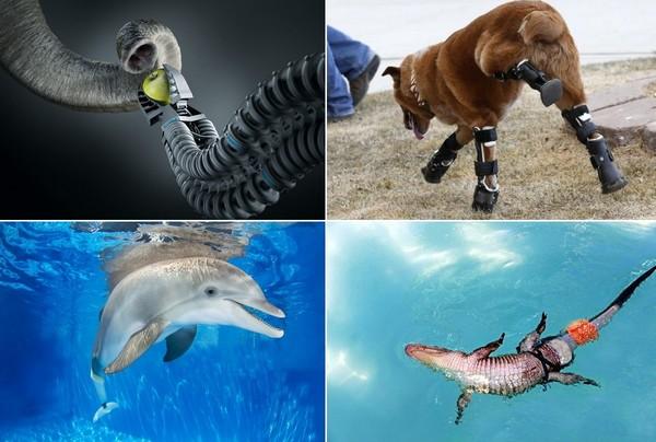 Удивительные протезы, созданные для животных
