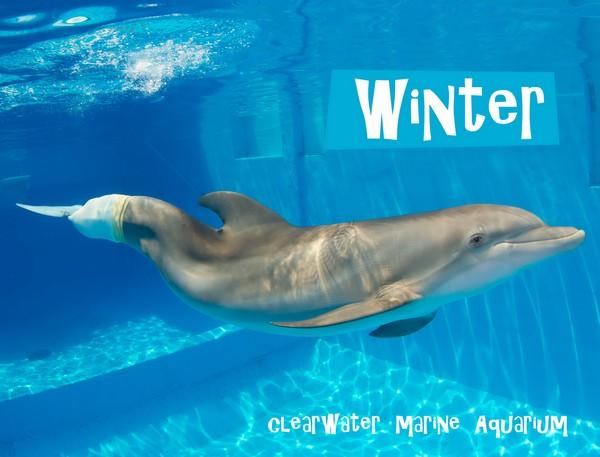Протез хвоста для дельфина. Источник фото: seewinter.com