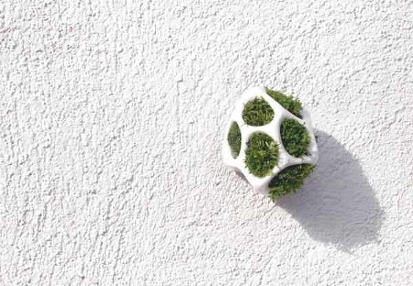 Оригинальный способ разведения растительности.