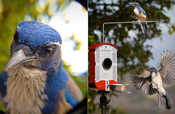 Кормушка, благодаря которой можно наблюдать и фотографировать птиц.