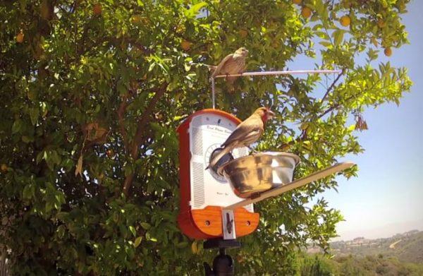 Кормушка Bird Photo Booth с сидящими на ней птицами.