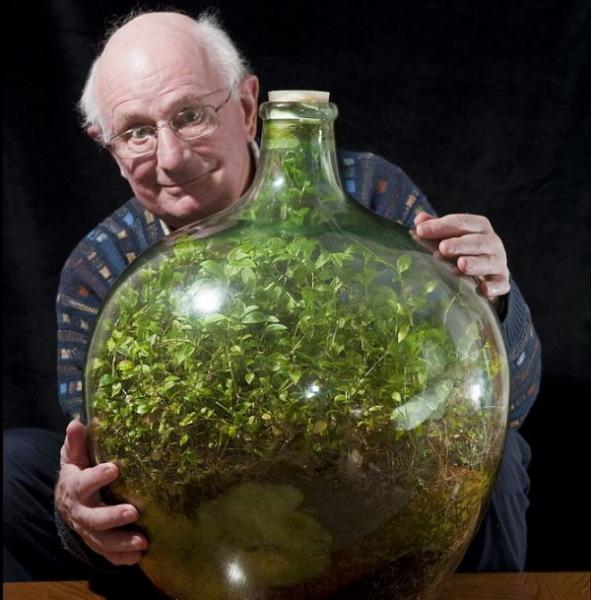 Растение в бутылке.
