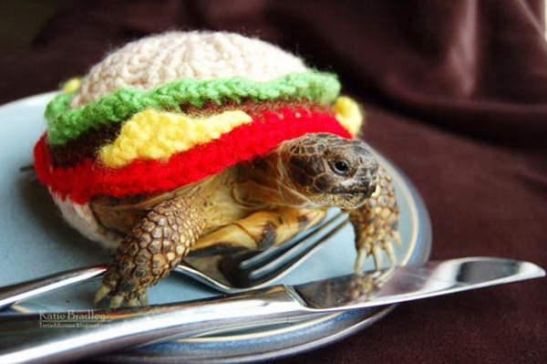 Черепаха - гамбургер.
