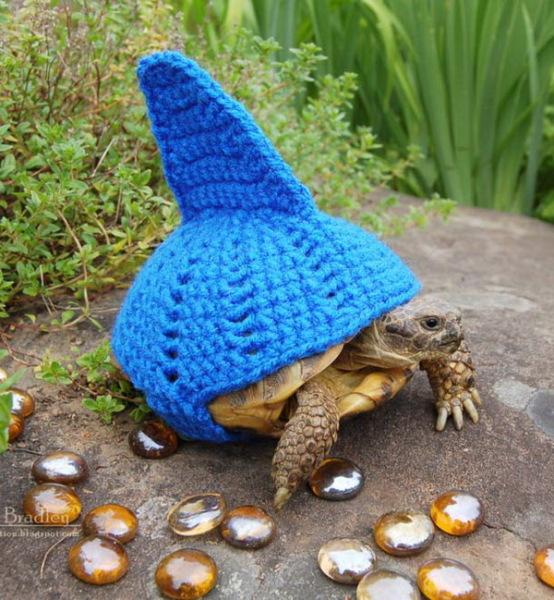 Черепаха - акула.