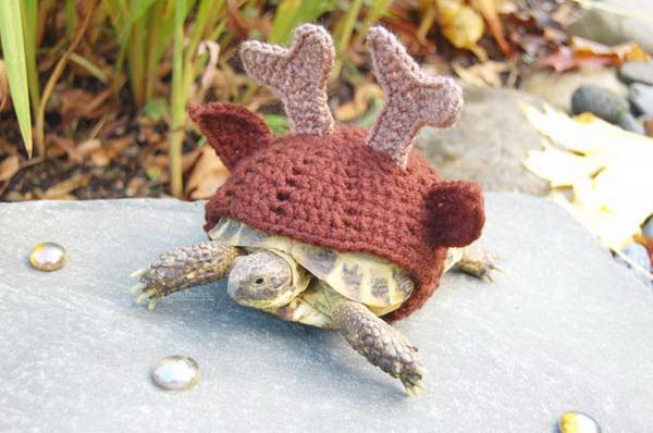 Вязаные костюмы для черепах.