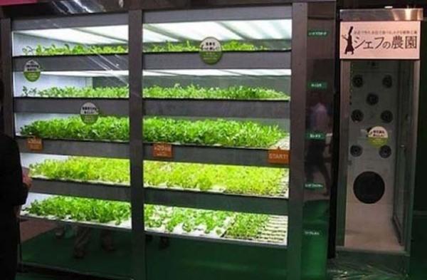 Свежие овощи из торгового автомата