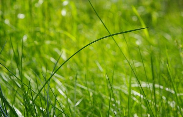 Источник вдохновения дизайнера - обыкновенная травинка.