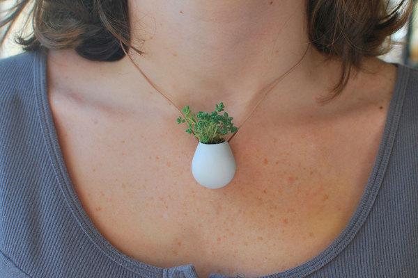 Комнатное растение как украшение.