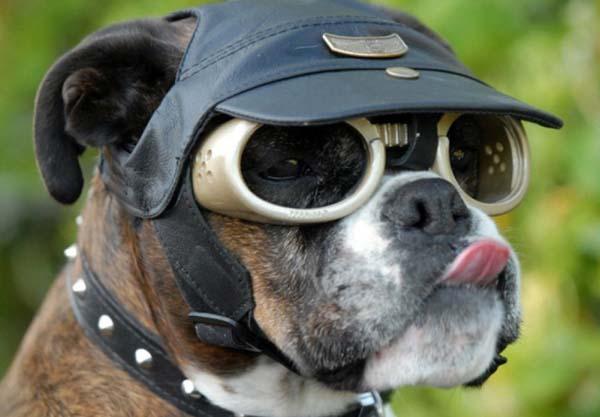 Очки для собаки