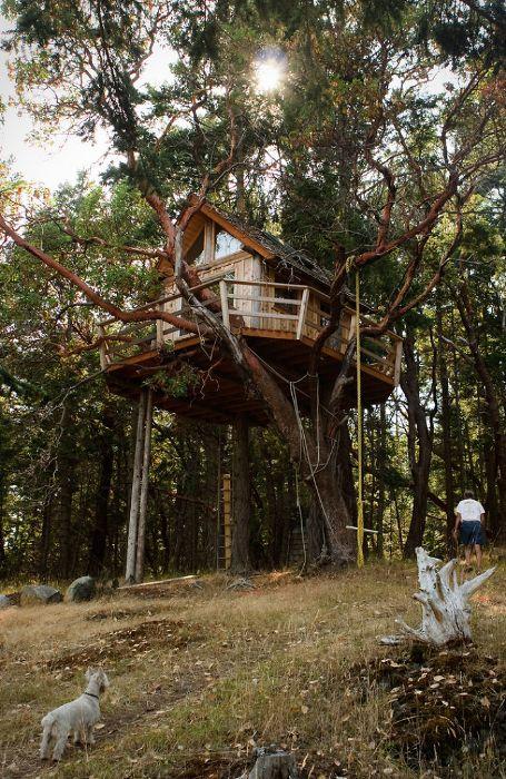 Жилище на дереве на Острове Генри.