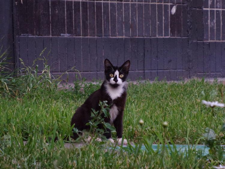 Отсутствие ручного баланса белого приводит к неожиданным результатам: плитка за кошкой должна быть не фиолетово-синей, а серой.