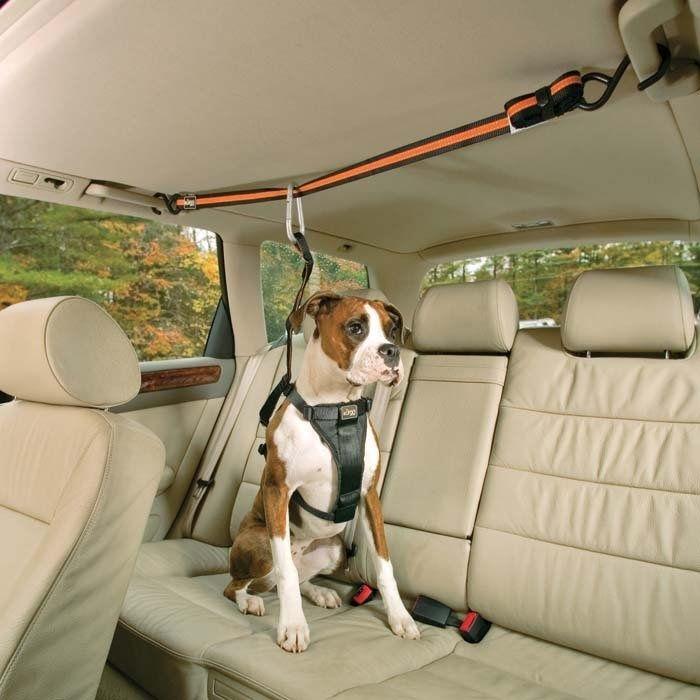 Собачье «авто-кресло».