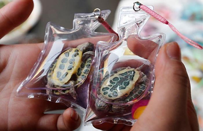 Живые брелоки для ключей и мобильных телефонов из настоящих животных в Китае