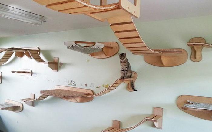 Подвесные дорожки для кота в стиле Индианы Джонс