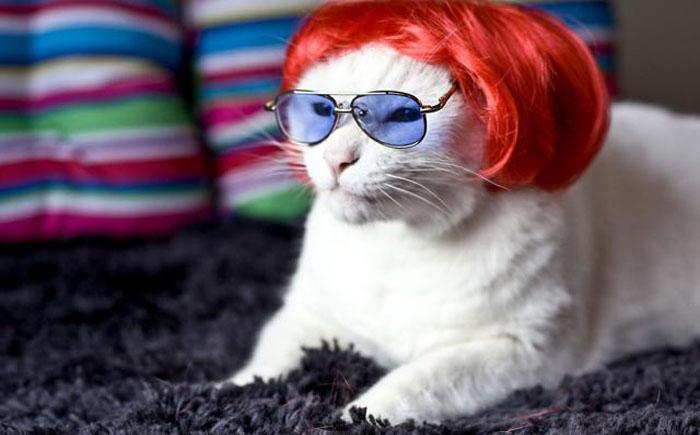 Парик для кота