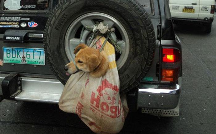 Мешок для собаки в настоящем