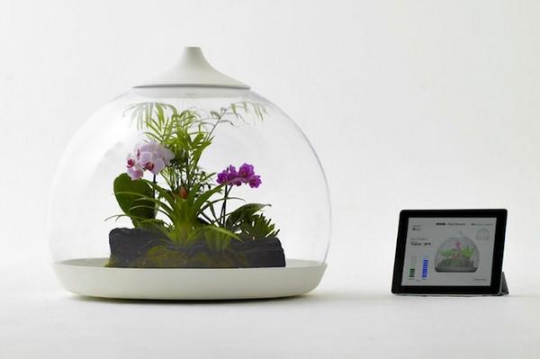 Biome Smart Terrarium – экосистема под управлением iPad