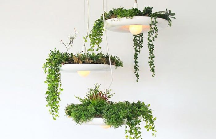 Необычный светильник, в плафоне которого можно разводить комнатные растения.