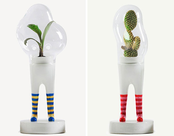 «Ходячие» растения.