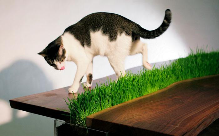 Обеденный стол и для человека и для кота