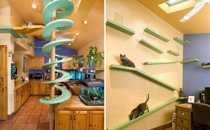 Кошачьи тропы, не ограничивающие пространство хозяина