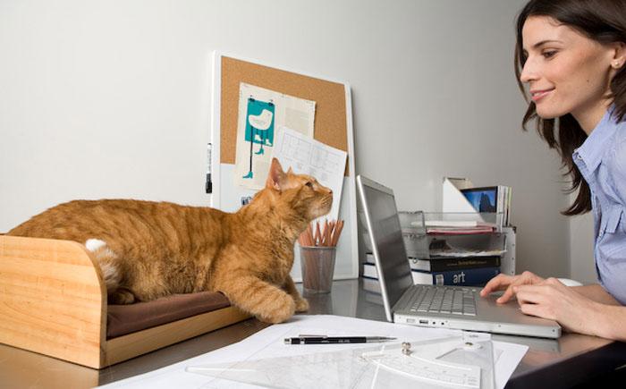 Специальный ящик для кота на компьютерном столе